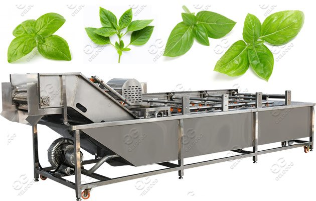 Commercial Use Herb Washing Machine P