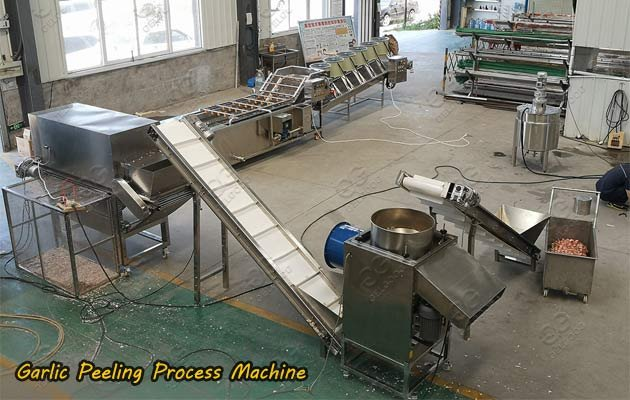 garlic process machine line