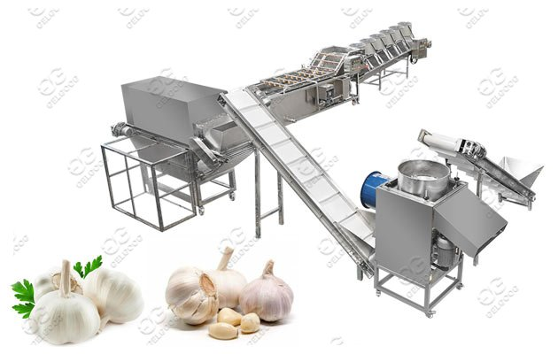 Gelgoog Garlic Peeling Machine Proces