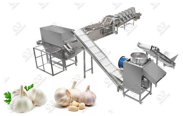 Gelgoog Garlic Peeling Machine Process Line For Industrial Use