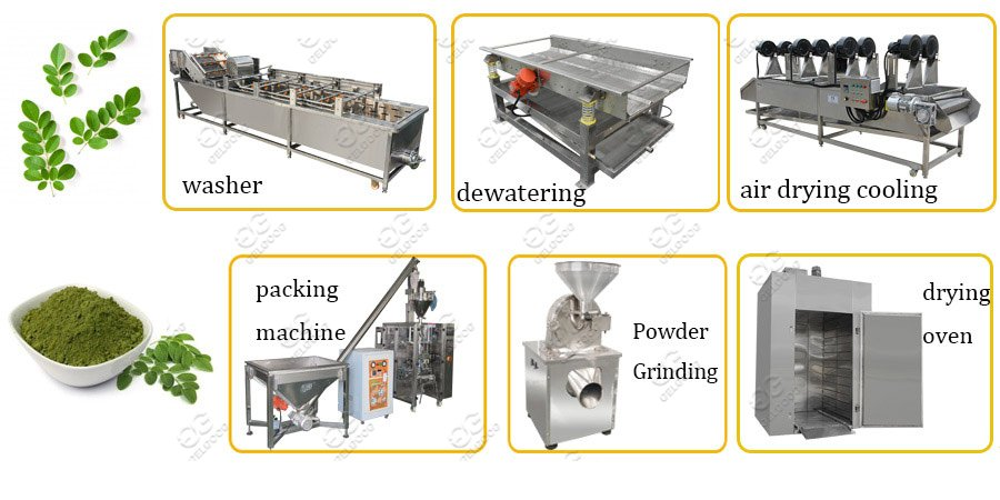 moringa leaf powder making machine line