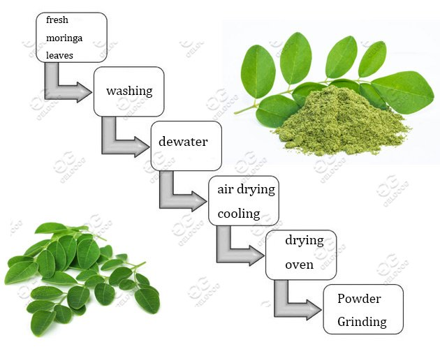 moringa leaves powder grinding machine line
