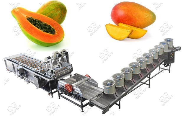 Bubble Type Papaya Washing Drying Machine Line Price
