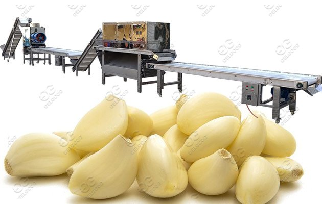 garlic process machine