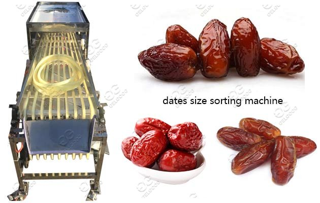 palm date sorting machine