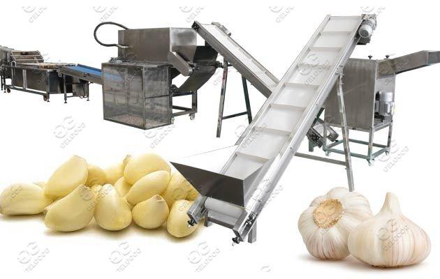 Gelgoog Garlic Peeling And Packing Production Line