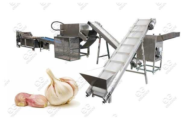 Gelgoog Garlic Process Machine Line Solution