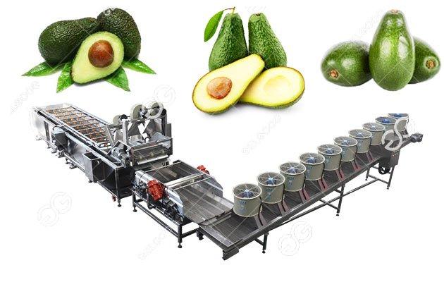 Commercial Avocado Fruit Washing Drying Machine Line