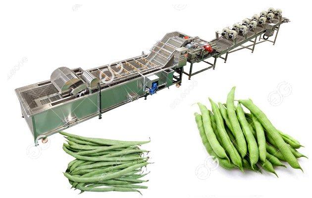 Green Bean Washing Drying Machine Line